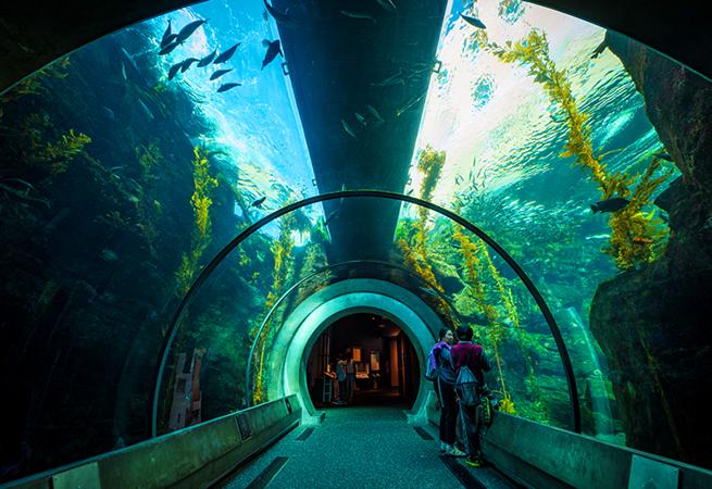 California Science Center  Discover La Mirada California